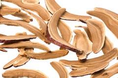 Dried Lingzhi mushrooms Stock Image