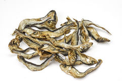 Dried little fishes Stock Images