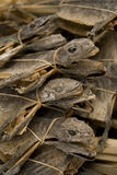 Dried lizards in market singapore asia. Dried lizards singapore asia market medicine food traditional asian reptiles Royalty Free Stock Photos