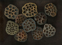 Dried Lotus Pods Stock Photos
