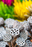 Dried lotus pods gray red yellow green flowers nature outdoor Stock Photo