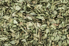 Dried Lovage Background Royalty Free Stock Photography