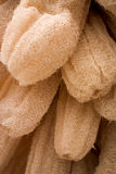 Dried Luffa (Loofah). Full frame detail of dried loofah on sale in a Tunisian market place Stock Images