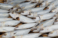 Dried  mackerel fish Royalty Free Stock Photos