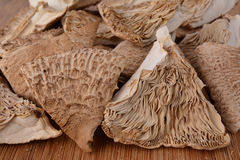 Dried Macrolepiota Procera close up Stock Image