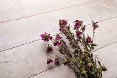 Dried magenta flowers on rustic wooden planks Royalty Free Stock Photos