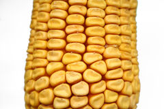 Dried maize corncob. Seeds close-up Stock Image