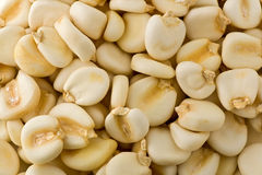 Dried Maize Mote. Background texture of several dried maize mote, also known as hominy Royalty Free Stock Photos