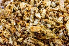 Dried Mantis Shrimp Stock Images