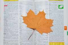 Dried maple leaf on the open ENCYCLOPAEDIA Stock Images