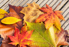 Dried maple leave Stock Photos