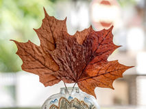 Dried Maple Leaves stock photography