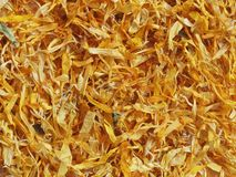 Dried Marigold flowers Royalty Free Stock Photography