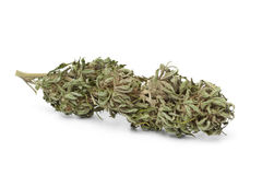 Dried marijuana bud with visible THC Royalty Free Stock Image