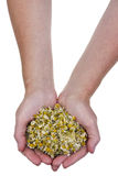 Dried medical camomile in hand Royalty Free Stock Image