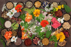Dried Medicinal Flowers and Herbs. Dried medicinal flower and herb selection with essential oil bottle used in natural herbal alternative medicine on parchment Stock Image