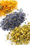 Dried medicinal herbs. Piles of dried medicinal herbs camomile, lavender, calendula on white background Stock Image