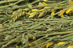 Dried medicinal herbs  background Stock Images