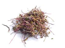 Dried medicinal herbs raw materials on white. Thymus.  royalty free stock image