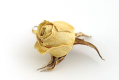 Dried memory. Dried rose bud on a white background Royalty Free Stock Image