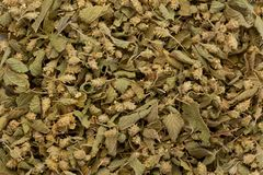Dried Mexican Oregano stock image