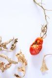 Dried mini tomato Royalty Free Stock Photo