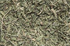 Dried mint Stock Photos