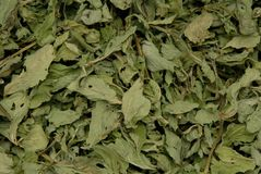 Dried mint Royalty Free Stock Image