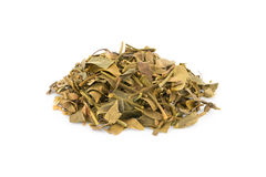Dried Mistletoe Stock Image