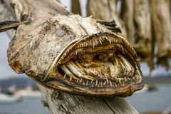 Free Dried Monkfish Royalty Free Stock Image - 29327306