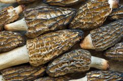 Dried Morel Mushrooms Arranged and Interlocked, Like a Puzzle. Morel mushrooms laying flat on a wooden surface and arranged very tightly like puzzle pieces Stock Photo