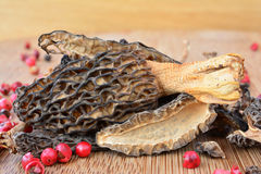 Dried Morels close up Royalty Free Stock Photos