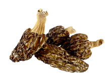 Dried morels on a white Stock Photography