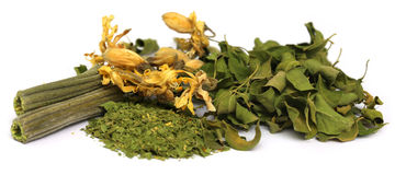 Dried moringa with leaves and flower Stock Image