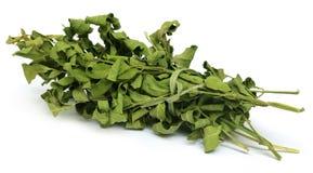 Dried moringa leaves Royalty Free Stock Image