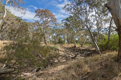 Dried Mosquito Creek Line At Naracoorte Forest During Autumn In Stock Photos