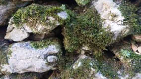 Dried moss royalty free stock photos