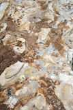 Dried mud Stock Images