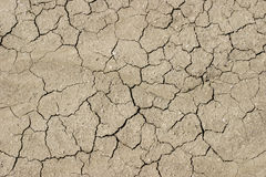 Dried mud with cracks stock photography
