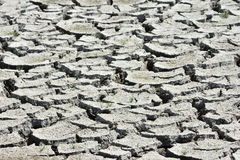 Dried mud cracks Stock Images