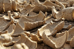 Dried mud in a drought Stock Photos