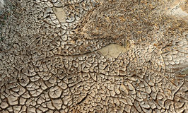 Dried mud pan it time of drought Royalty Free Stock Images
