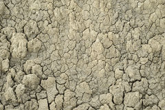 Dried mud texture one Royalty Free Stock Image