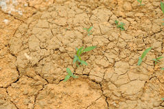 Dried mud with young grass Stock Photos