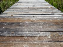 Dried muddy animal footprints of raccoon, deer, possums and more on a wooden dock stock photo