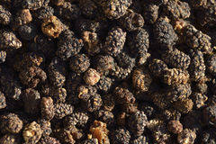 Dried mulberry Royalty Free Stock Photography