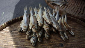 The dried mullets fish on the threshing basket Royalty Free Stock Photo