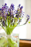 Dried muscari in a vase. Bouquet of dried grape hyacinths (Muscari) in a small green vase Stock Photos