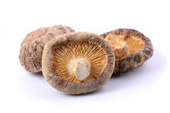 Dried Mushroom Stock Images