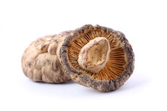 Dried Mushroom Royalty Free Stock Photography